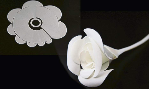A before and after photo of the self-folding origami flower. A flat cut out when dry, it folds into a rose when dipped in hot water